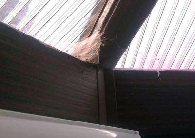Gallery-conservatory-cobwebs